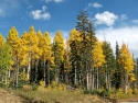 Indian Summer im Cedar Breaks National Monument